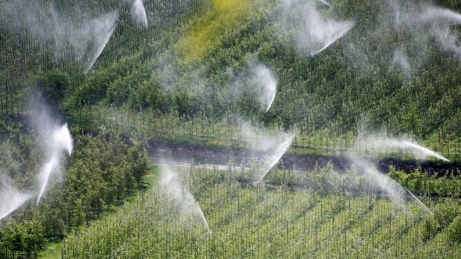 """Skąd sinice w Bałtyku? Wpływa na to """"nierozwiązany problem"""" rolnictwa"""