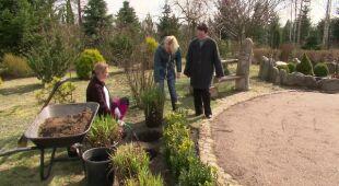 Bardzo długi ogród z ciekawymi roślinami (odc. 491)
